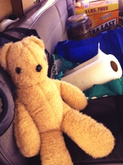 Cootie hates sharing the road trip with a cat